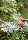 Myrtilles et champignons Photo stock