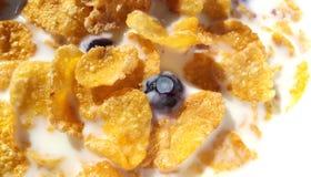 Myrtilles et flocons d'avoine frais avec du lait Image libre de droits