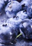 Myrtilles fraîches Photographie stock