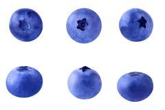 Myrtilles fraîches d'isolement Image stock