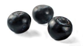 Myrtillus presque noir de vaccinium de trois myrtilles d'isolement dessus images stock