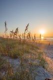 Myrtle παραλία Στοκ εικόνες με δικαίωμα ελεύθερης χρήσης
