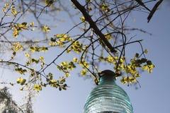 Myrtle υφάσματος κρεπ και ηλιακό φανάρι Στοκ Εικόνες