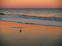 Myrtle Beach Pink Sunset Royalty-vrije Stock Afbeelding