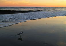 Myrtle Beach Sunset royaltyfri foto