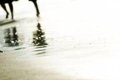 Myrtle beach walk. Myrtle beach beach sea seaside ocean walk beach beach walk water sunrise sunset South Carolina Stock Images