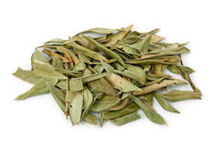 Myrtle herb stock photography