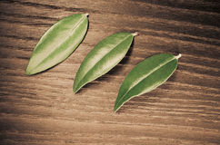 Myrtle leaves. Three myrtle leaves on a wood background royalty free stock image
