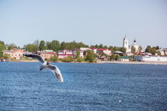 Myshkin, seagull. Myshkin is a town and the administrative center of Myshkinsky District in Yaroslavl Oblast, Russia, located on the steep left bank of the Volga Stock Image