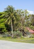 Mysig stuga bland palmträd Arkivbild