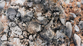 Myslachowice Conglomerate Stone. Usable as texture or background Royalty Free Stock Photo