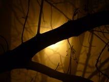 Mystère dans la forêt derrière la brume Images stock