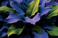 Mysteriöse Blätter Stockbild