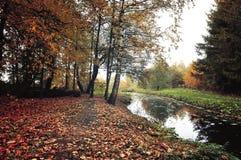Mysteriöse Landschaft des Herbstes in den Weinlesefarben - Herbstbäume und schmaler Waldfluß im wolkigen Wetter Stockbilder