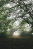 Mysteriöse Wegabflussrinne der Nebel im Wald Stockfoto