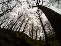 Mysteriöse Welt von Bäumen in den britischen Wäldern Lizenzfreies Stockfoto