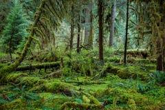 Mysteriöser Dschungel Lizenzfreies Stockfoto