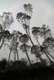 Mysteriöser Dschungel Stockbild