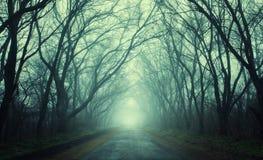 Mysteriöser dunkler Herbstwald im grünen Nebel mit Straße, Bäume Stockbild