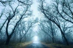 Mysteriöser dunkler Herbstwald im grünen Nebel mit Straße, Bäume Lizenzfreies Stockfoto