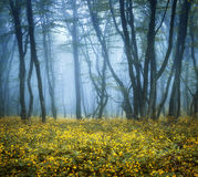 Mysteriöser dunkler Wald im Nebel mit Grünblättern und -blumen lizenzfreie stockfotos