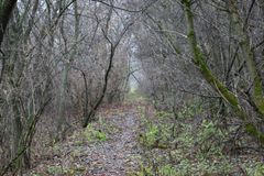Mysteriöser feuchter Herbstwald stockfotos