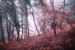 Mysteriöser Frühlingswald im Nebel mit Rosablättern und roten Blumen lizenzfreie stockfotos