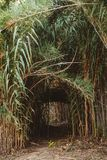 Mysteriöser grüner Eingang im Park lizenzfreie stockfotos