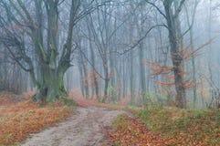 Mysteriöser nebeliger Herbstwald stockfotos