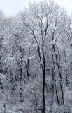 Mysteriöser tiefer Wald mit dem ersten Schnee Lizenzfreies Stockfoto