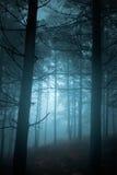 Mysteriöser Wald Stockbilder