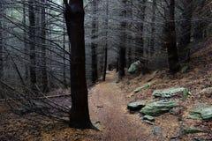Mysteriöser Wald Stockfoto