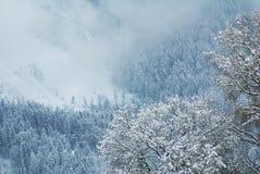 Mysteriöser Wald in den österreichischen Alpen Stockfotos