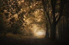 Mysteriöser Wald der Wegabflussrinne im Herbst Stockbild