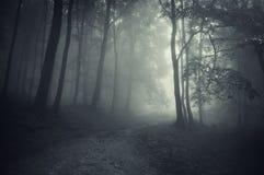 Mysteriöser Wald der Wegabflussrinne mit Nebel Stockfotos