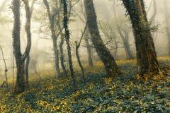 Mysteriöser Wald im Nebel mit Grünblättern und gelben Blumen lizenzfreies stockbild