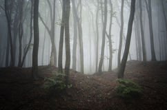 Mysteriöser Wald mit Nebel Lizenzfreie Stockfotografie