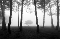 Mysteriöser Wald in Schwarzweiss Stockbilder