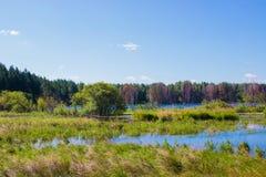 Mysteriöser Wald und See auf dem Gebiet von Russland lizenzfreies stockfoto