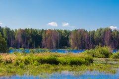 Mysteriöser Wald und See auf dem Gebiet von Russland stockfoto