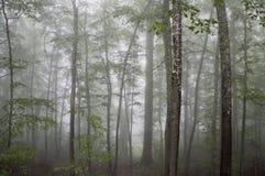 Mysteriöser Waldmorgens Nebel Stockfotos