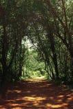 Mysteriöser Waldtunnelhintergrund Stockfotos