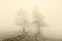 Mysteriöser Weg, der durch Bäume mit Sepiafarbe umgibt Lizenzfreie Stockfotografie