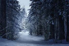 Mysteriöser Winterwald im dunkelblauen farbigen Wald lizenzfreies stockbild