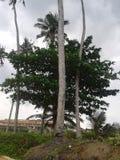 Mysteriöses Ghana Stockbild
