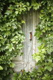 Mysterious abandoned door Royalty Free Stock Photos