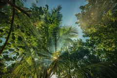 A mysterious atmosphere with palms in the jungle, exotic woods. In maldives royalty free stock images