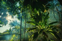 A mysterious atmosphere with palms in the jungle, exotic woods. In maldives royalty free stock image