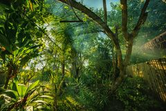 A mysterious atmosphere with palms in the jungle, exotic woods. In maldives royalty free stock photo