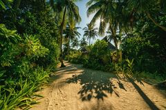 A mysterious atmosphere with palms in the jungle, exotic woods. In maldives stock photo